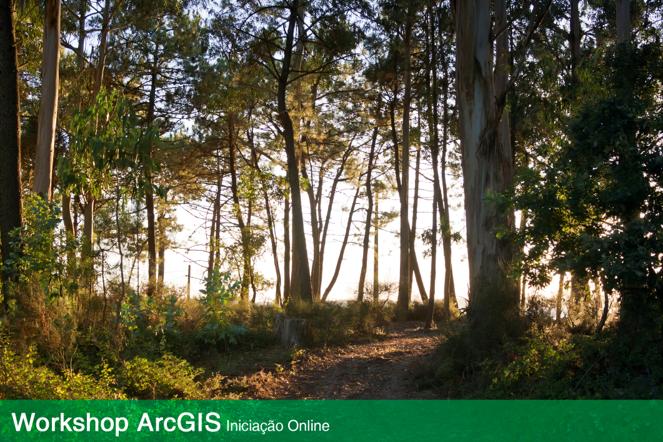 Formação Floresta @ Albergaria-a-Velha